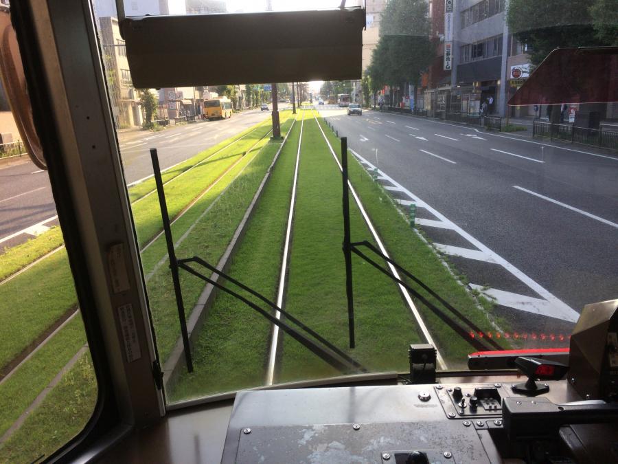 路面電車の走るレールが敷かれている背の低い草