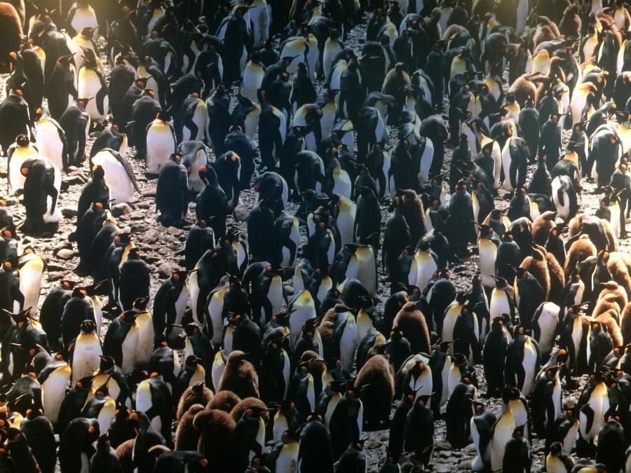 ペンギン水族館の入り口すぐにあるペンギンの大群の写真