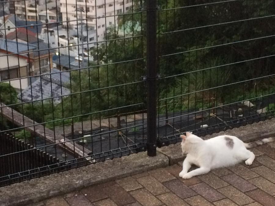 グラバースカイロードを登り到着した広場の猫