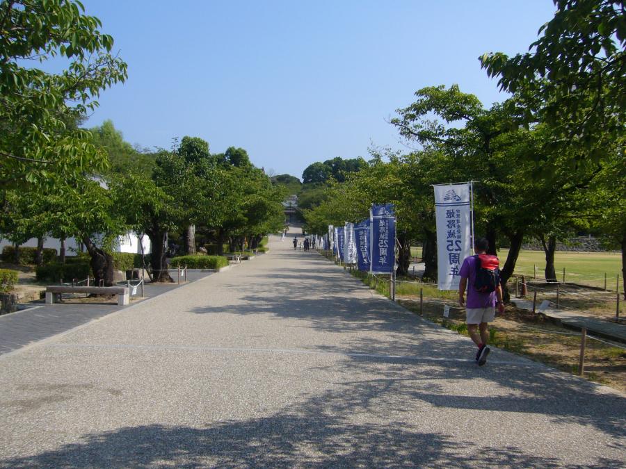 広い芝生を右手に続く桜木の道