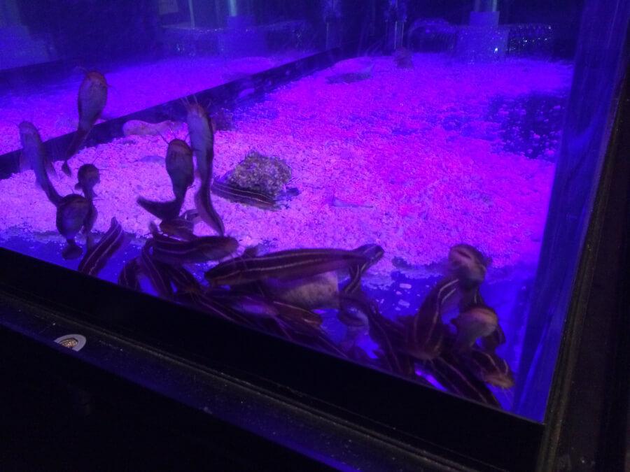 深海の珍しい魚
