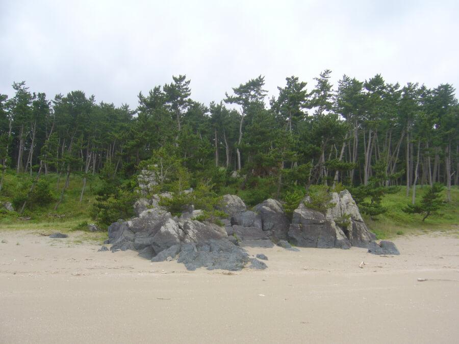 大須賀海岸から陸側を観た風景