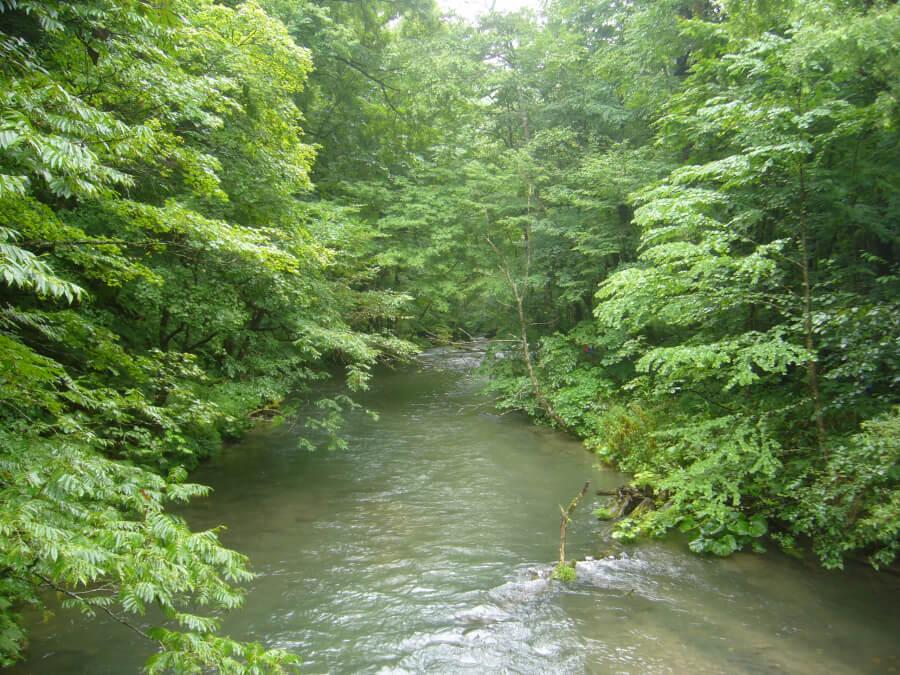 奥入瀬渓流の橋から撮影した川