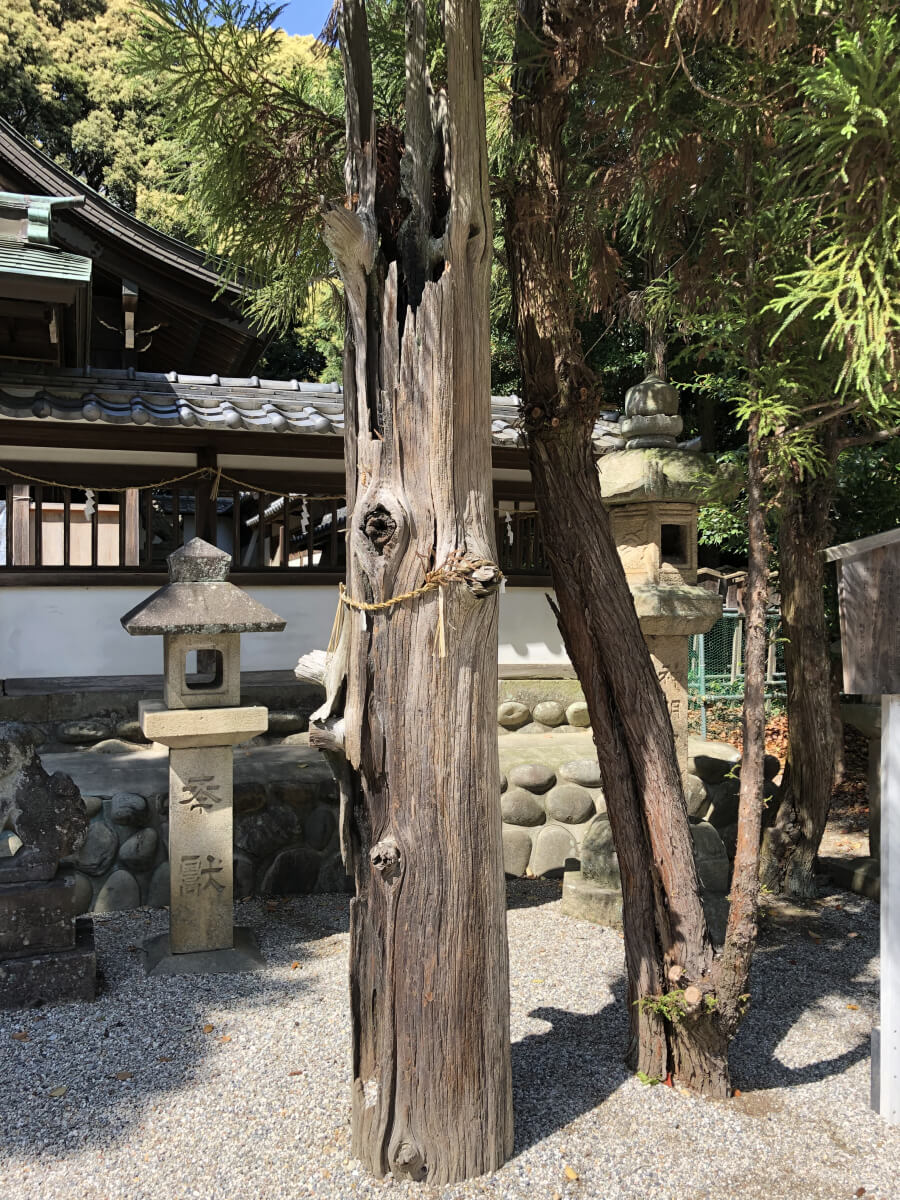 4代尾張藩主徳川吉通が植えた杉の枯木