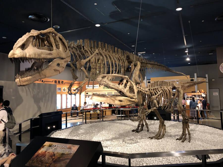 恐竜の骨|名古屋市科学館の展示室
