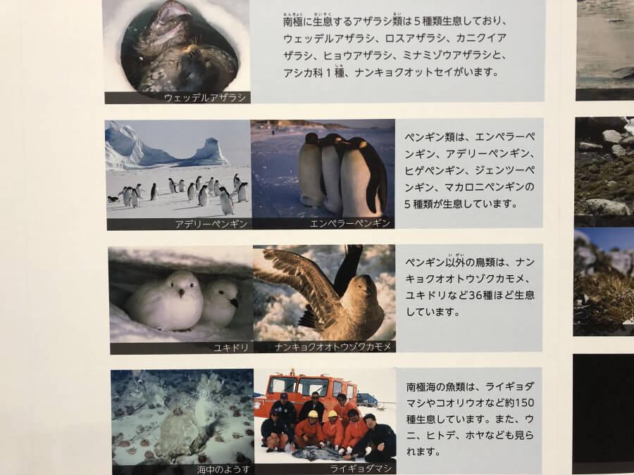 南極に住む動物たち|南極観測船ふじ
