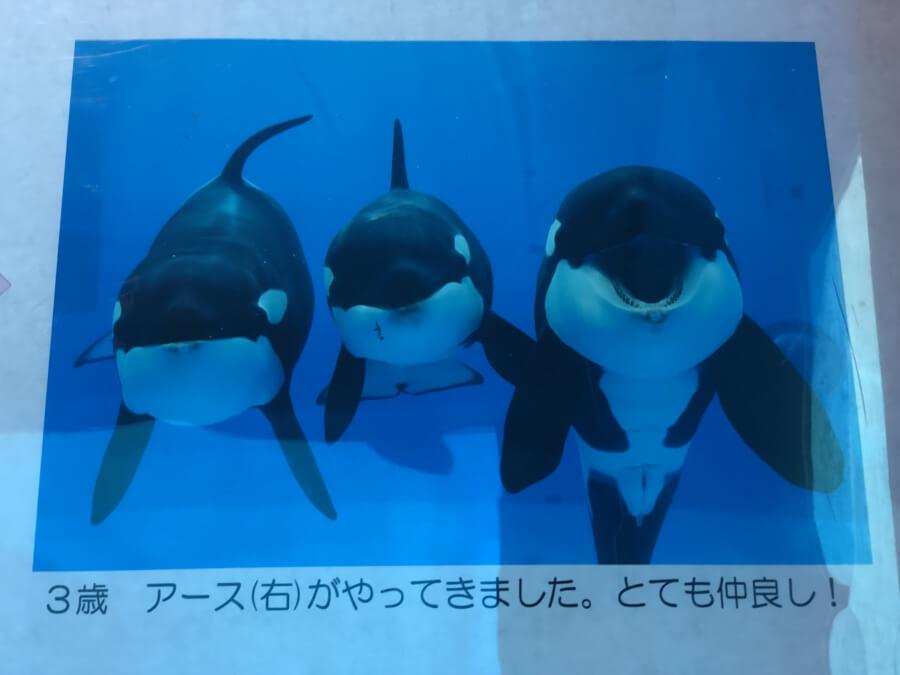 シャチの仲間の写真|名古屋港水族館