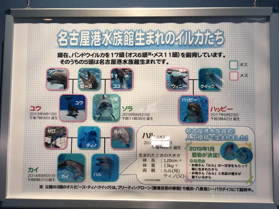 名古屋港水族館生まれのイルカたち