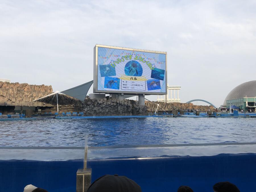 メインプール|名古屋港水族館