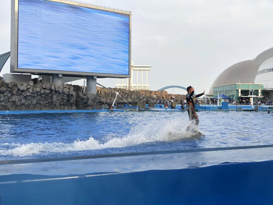 イルカショーで人が波に乗るパフォーマンス|名古屋港水族館