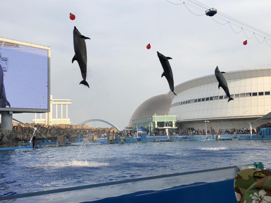 イルカショーのジャンプパフォーマンス|名古屋港水族館