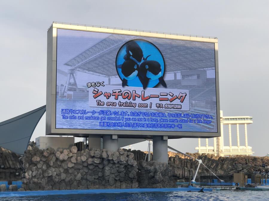 シャチトレーニング|名古屋港水族館