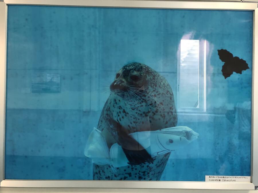 魚のぬいるぐみを抱えるゴマフアザラシ