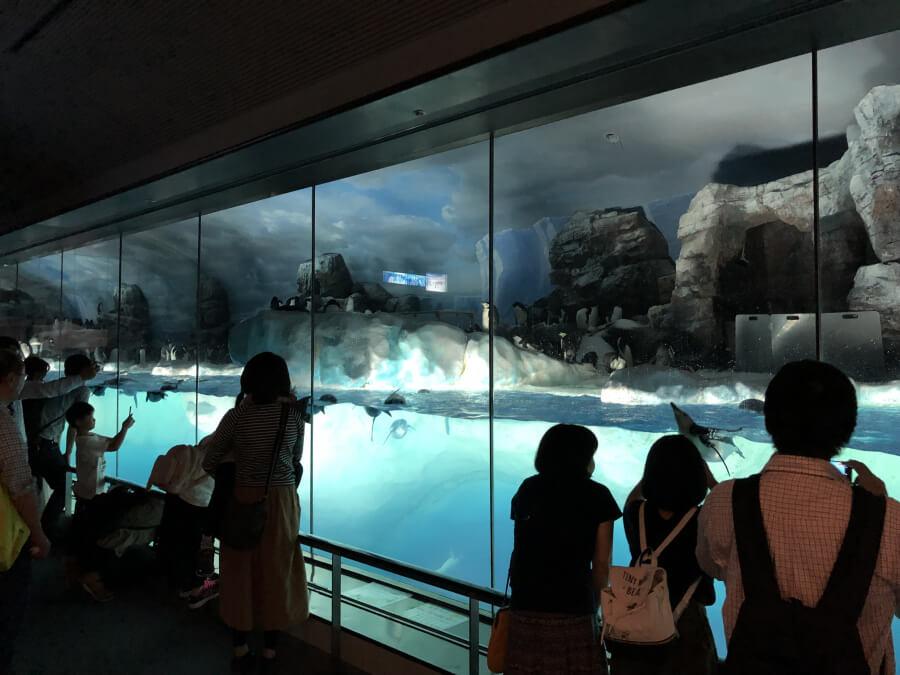 ペンギンコーナー|名古屋港水族館