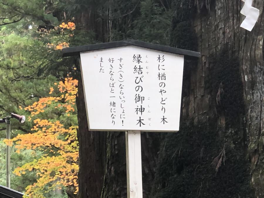 縁結びの御神木の看板